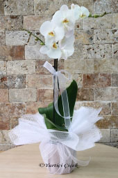 Tekli Beyaz Saksı Orkide    Onu özel hissettirecek, bulunduğu ortamı şenlendirecek bir çiçektir orkide. Sadece özel günlerde değil içinizden geldiği için de çiçek gönderebilirsiniz..
