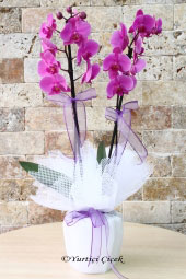 Hayat onun yanındayken daha da kıymetlenir. Göndereceğiniz mor orkide ile sevginizi anlatın.