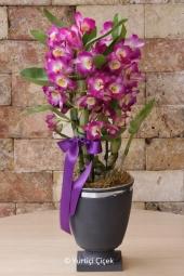 Sevdiklerinizin ve sizin mutlu günlerinizde beyaz kadeh vazoda antoryum, orkide ve egzotik yeşilliklerden aranjman ile gösteriş ve zerafeti birlikte yaşayın.