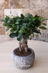 Şık görünümlü elma şeklinde cam vazo içerisinde terarium bitkileri.  Farklı türde 6 adet sukulent kaktüs bitkisi