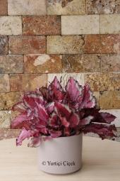 Sevdiklerinize cam vazoda renkli kır çiçeklerinden hazırlanmış sevgi dolu bir buket gönderin.