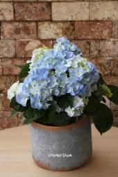 Sevginize tercüman en özel çiçek orkideyi cazip fiyat avantajıyla gönderebilir, Sevdiklerinizi mutlu etme fırsatını hemen yakalayabilirsiniz. Yaklaşık Ürün Boyutu : 50 cm