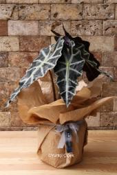 Özel Vazosunda 8 Adet Kaktüsten Hazırlanan Terrarium ile Sevdiklerinize Hoş Bir Sürpriz Yapabilirsiniz. Yaklaşık Ürün Boyutu : 35 cm