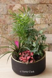 Özel Vazosunda 7 Adet Kaktüsten Hazırlanan Terrarium ile Sevdiklerinize Hoş Bir Sürpriz Yapabilirsiniz. Yaklaşık Ürün Boyutu : 35 cm