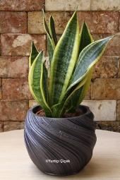 Özel Vazosunda 5 Adet Kaktüsten Hazırlanan Terrarium ile Sevdiklerinize Hoş Bir Sürpriz Yapabilirsiniz. Yaklaşık Ürün Boyutu : 35 cm