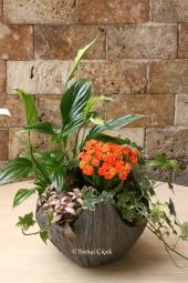 Özel Seramik Ayakkabıda 4 Adet Kaktüsten Hazırlanan Terrarium ile Sevdiklerinize Hoş Bir Sürpriz Yapabilirsiniz. Yaklaşık Ürün Boyutu : 35 cm