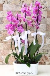 Fuşya Orkide : 2 Adet   Yeni bir başlangıç ya da bir doğum günü için en güzel hediyedir çiçek. Seramikte orkideler ile sevdiklerinizin mutluluğunu daha da arttırabilirsiniz. Yaklaşık Ürün Boyutu : 65 cm