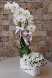 Mor Orkide ve Lilyumlar  Sevginize yakışacak en güzel kelime seviyorum, en görsel hediye ise çiçektir. Sevdiklerinize özel orkide ve lilyumlardan hazırlanan aranjman gönderin.
