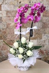 Çift Dallı Mor Orkide ve Beyaz Güller Sevdiklerinize Olan Uyumun En Güzel Çiçeği Olacak.