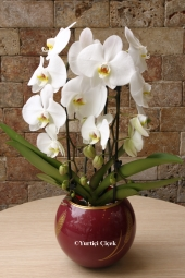 Yuvarlak fanus cam vazo içerisinde özenle hazırlanmış, sukulent kaktüs çeşitleri ile sevdiklerinizi mutlu esin. Birbirinden farklı 6 adet minyatür sukulent kaktüs bitkisinden oluşan aranjman