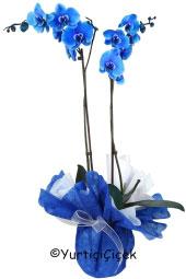 Sevginizi vazoda rengarenk güller göndererek gösterin. Renkli ithal güller sevdikleriniz için harika bir sürpriz olacak.