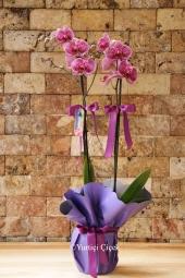 Pembe Kutusunda Orkide ve Kır Çiçekleri ile Hazırlanan Aranjman Sevdikleriniz İçin Çok Özel Bir Sürpriz Olacaktır.