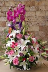 Çift Dallı Mor Orkide, Lilyum ve Güller   Özel günlerinizde götürebileceğiniz ya da sevdiklerinize gönderebileceğiniz en özel aranjmandır orkide aranjmanları.