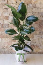 Beyaz Lilyum, Gerbera ve Beyaz Gül  Hoş bir süpriz için bugün sevdiklerinize çiçek gönderebilirsiniz. Seramikte hazırlanan aranjman dizaynı ile onlara zerafetin en yalın halini sunacaksınız.