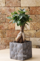 Özel Seramikte 4 Adet Kaktüsten Hazırlanan Terrarium ile Sevdiklerinize Hoş Bir Sürpriz Yapabilirsiniz. Yaklaşık Ürün Boyutu : 25 cm