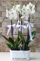 Seramikte çift dallı 2 adet orkide ile sevdiklerinizin gönüllerinde taht kuracaksınız.
