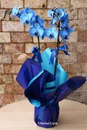 Mavi Orkide    Sevginin ve masumiyetin sembolu mavi orkide sevdiklerinizin ev, iş yeri, ofis gibi ortamlarına renk katacak harika bir hediye olacak.