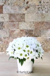 Beyaz düşlerinizi yansıtacak gönlünüzün aynası beyaz papatyalardan aranjman sevdiklerinizin güzel bir güne merhaba demesi için harika bir hediye.