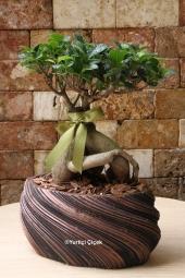 Bodur ağaç görünümlü ev, ofis gibi gönderdiğiniz ortamlara farklı hava katacak bonsai bitkisi sevdikleriniz için güzel bir hediye olacak.