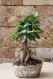 Özel Vazosunda 8 Adet Kaktüsten Hazırlanan Terrarium ile Sevdiklerinize Hoş Bir Sürpriz Yapabilirsiniz. Yaklaşık Ürün Boyutu : 30 cm