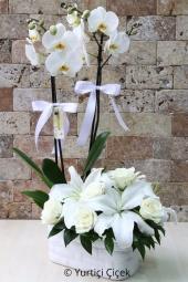 Çift dallı beyaz orkide ve yanına beyaz gül ve lilyumlardan hazırlanan aranjman ile sevginiz kadar kocaman bir çiçek gönderin.