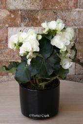 En uygun fiyata yurtdışına şık ambalaja sarılacak tek gül gönderin. Sevdiklerinize yurtdışına çiçek gönderme keyfini yaşayın!