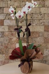 17 adet kırmızı gülden hazırlanan egzotik tasarım buket ile sevdiğinize uluslararası çiçek gönderimi yapabilirsiniz.