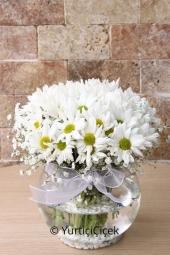 Papatyanın masumiyeti ve sevgi dolu duruşu ile sevdikleriniz için hak ettikleri en güzel çiçeği şimdi gönderebilirsiniz. Yaklaşık Ürün Boyutu : 30 cm