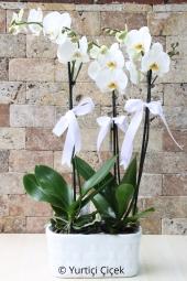 3 Dal Beyaz Orkide ile Sevdiklerinize Kocaman Bir Sürpriz Yapabilir, Unutulmaz Dakikaları Orkide Göndererek Yaratabilirsiniz.