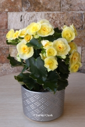 15 kırmızı gülün kalp vazoda hazırlanan tasarımı sevdiklerinize kalbinizden geçenleri anlatmaya yetecektir. Yaklaşık Ürün Boyutu : 55 cm