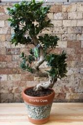 Minyatür ağaç bonsai ile sevdiğinize en özel sürprizi yapmaya ne dersiniz?