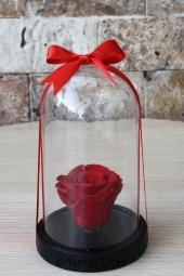 Sarı Orkidenin Sımsıcak Sevimliliği ile Sevdiğinizin Kalbini Isıtacak Bir Sürpriz Yapabilirsiniz. Yaklaşık Ürün Boyutu: 60 cm