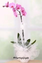 Tek Dal Orkide   En hoş renkli orkideler sevdiklerinize göndermeniz için özel olarak hazırlandı. Onları mutlu etmek bu orkideler ile çok ama çok kolay. Yaklaşık Ürün Boyutu : 60 cm