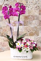 Sevdiklerinize onları özel hissettirecek çift dallı mor orkide ve kır çiçeği aranjmanı ile güzel bir sürpriz yapın.
