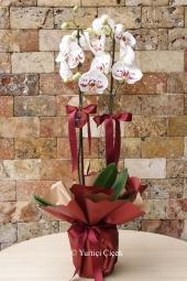 Kırmızı Gül : 15 Adet   Yurtdışına hediye göndermek istiyorum diyorsanız cam vazoda kırmızı güller seçebileceğiniz en güzel çiçeklerdendir.
