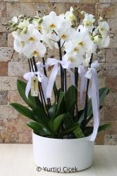 Saksı Orkideler  Sevdiklerinizi ne kadar çok sevdiğinizi onlara en özel çiçek olan orkideyi göndererek gösterin. Seramikte 3 adet orkide ile mutlu anlar yaratın.