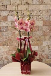 Sevdiğiniz için özel ve anlamlı bir orkide seçmek istiyorsanız Sarı Butik Orkide tam size göre.