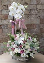 Orkide : 1 Adet, Beyaz Gül : 20 Adet Beyaz Lilyum : 5 Adet Kız isteme, söz, nişan ve diğer özel günleriniz için örgülü seramikte gül, orkide ve lilyumlardan tasarlanmış aranjman çiçek