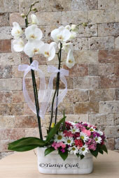 Orkide sevginin çiçeğidir. Sevdiklerinize orkide ve kır çiçeklerinden aranjman göndererek onlara ne kadar değerli ve özel olduklarını hissettirin. Yaklaşık Ürün Boyutu : 60 cm